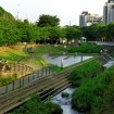 吉村04和泉川地蔵原の水辺1