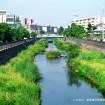 吉村07.いたち川自然復元2